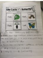 Primary 2 work on life-cycles!