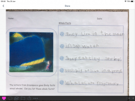 Primary 2 Facts about Whales